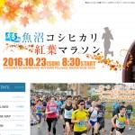 魚沼コシヒカリ 紅葉マラソン